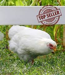Mayers poultry chicken meat